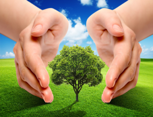 Restoring Ecosystems? It Is Environmentally Necessary and Also Economically Profitable
